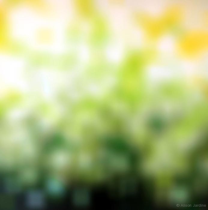 Sunlight Intermediate Abstraction IV (Digital Artwork)